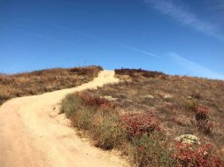 Steve-Grace-image-california-wilderness.jpg